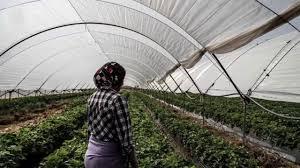 travailleuses agricoles lalla mimouna