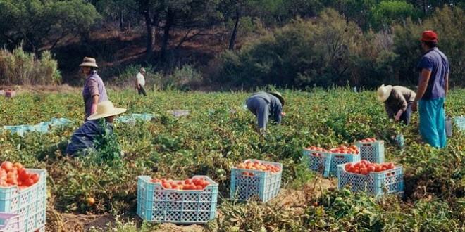 fonds de développement agricole